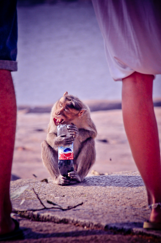 MOnkey Loves Pepsi ;)