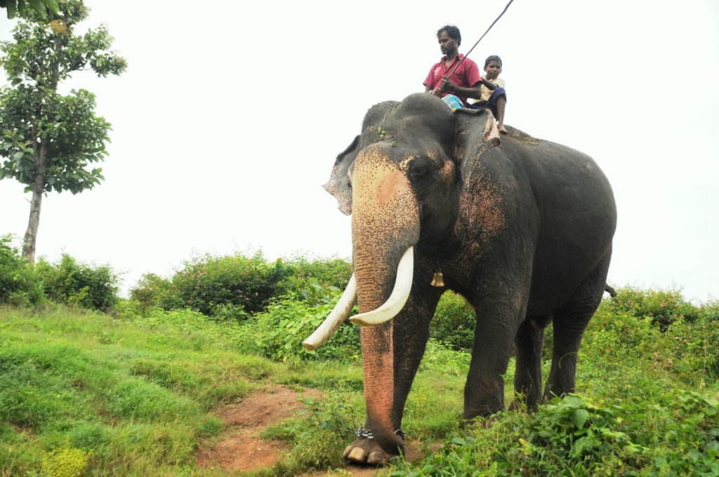 Mahout and his Elephant!